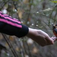 小鳥が手のひらにやってくる池