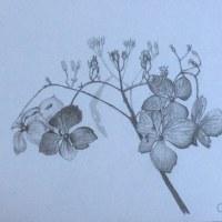 「秋なのに」 鉛筆画 A4サイズ !!