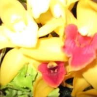 こんな花だった