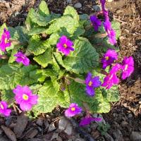 庭に開花する花