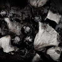 土に還る枯れ蓮
