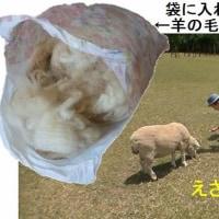 豚に真珠 猫に小判 我に羊毛