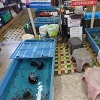 室内釣り堀 金魚屋よこいち(神奈川県横浜市)