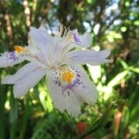春の花ときのこ特集