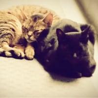ヒゲネコさんと、夫婦ネコさん、こんにちは。