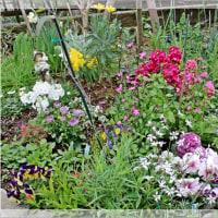 春色花壇になりました