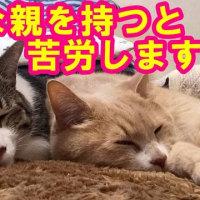キャットフード難民を卒業!?【猫日記こむぎ&だいず】2017.02.11