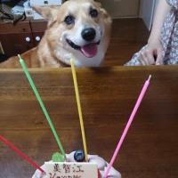 ケーキたち