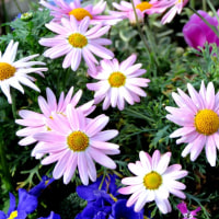 お花の撮影会1