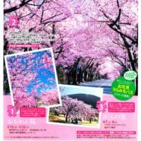 伊豆高原桜まつり 全国クラフトフェスティバル、いよいよ明日から。