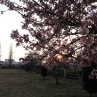 春の河原と広場♪