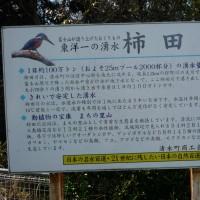 柿田川湧水群&ひかりのすみか・イルミネーション