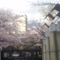 春のうららの~♪