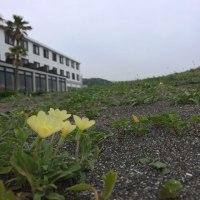 梅雨の晴れ間に思いつきで南房総館山へ
