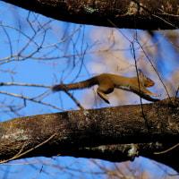 リス、樹上を駆ける