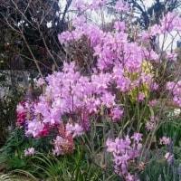 そう春は名のみの風の寒さや~~~今日あたりから~~~春の訪れ。