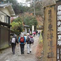 マッキーの山登り:箱根旧街道を歩き山酒会忘年会に参加