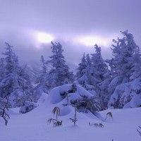 冬の八甲田山を見る