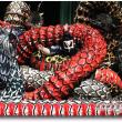筏津神楽団「八岐大蛇」④