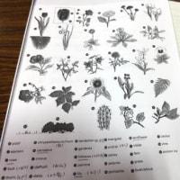 Gifu / English Lesson ( 英語教室)