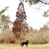 被災犬の追悼感謝祭