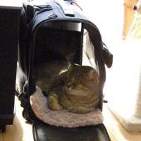 キャリーバッグのベッドが気持ち良い季節!