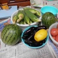 雨の朝の野菜収穫