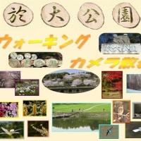 於大公園の花 : テーブル植込み ・・・ 10年前から東海沖地震が心配されてますが。鳥取地震がありました。