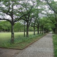 尾根緑道を歩く