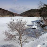 早春◆道草◆白い聖湖