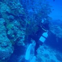 初日3本目「慶良間諸島・ウチザン礁」での51分