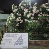 代々木広場のラオスフェス