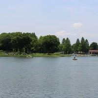 昭和記念公園のあじさい