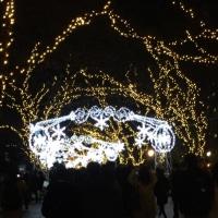 Road of the bilingual;御堂筋 光の響宴2016 Christmas lights ⭐️