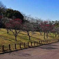 堺市・荒山(こうぜん)公園・梅林へ・・・3