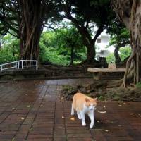 梅雨真っ最中の沖縄の猫たち 2016年5月 その4
