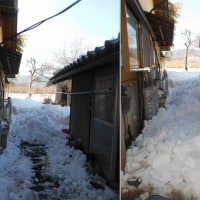 引き続き雪かき