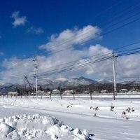 アスク周りの雪の様子をご紹介します。