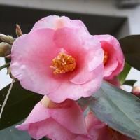 春の花が咲きだしてきた