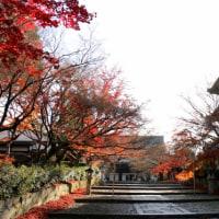 晩秋の紅葉の美・京都「真如堂」へ