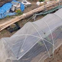 スイカ3品種を植える <我が家の菜園113>