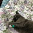 くー   鼠色の猫