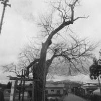 秋田県研修旅行