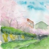山口一の坂川 桜