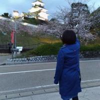170423  掛川城で夜桜で一杯