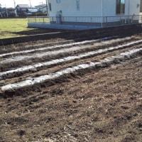 二代目家庭菜園 14631