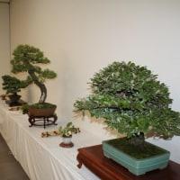 宗像市芸術祭盆栽展に行ってきました。