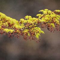 今日の野鳥   サンショウクイ・カルガモ(栃木県民の森)