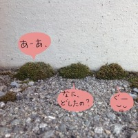 小さな苔さがし〜春よ来ーい!