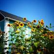 『季節の花』 向日葵の家
